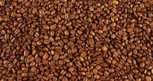 پخش دانه قهوه روبوستا