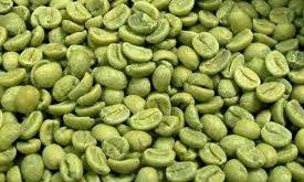 مرکز خرید دانه قهوه سبز مرغوب