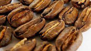 سایت عرضه دانه قهوه کشور مکزیک