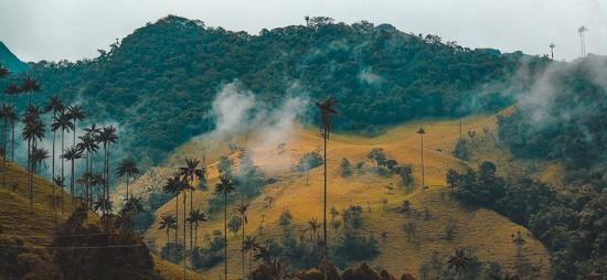 تولید قهوه کلمبیا